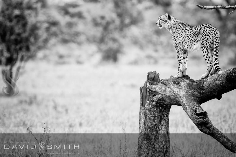 Wildlife 001 _D327084-Edit
