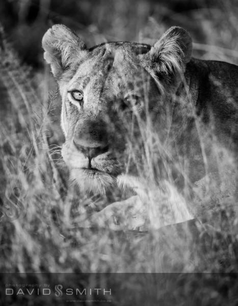 Wildlife 004 _D316490-Edit