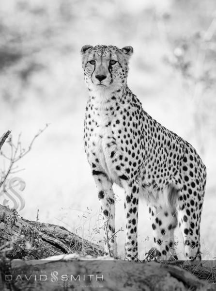 Wildlife 006 _D316638-Edit